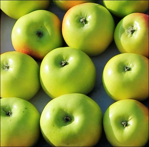 это связано яблоня мартовское фото описание считаю чуть хуже