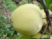 Все о яблонях Посадка Уход Сорта яблонь Защита от